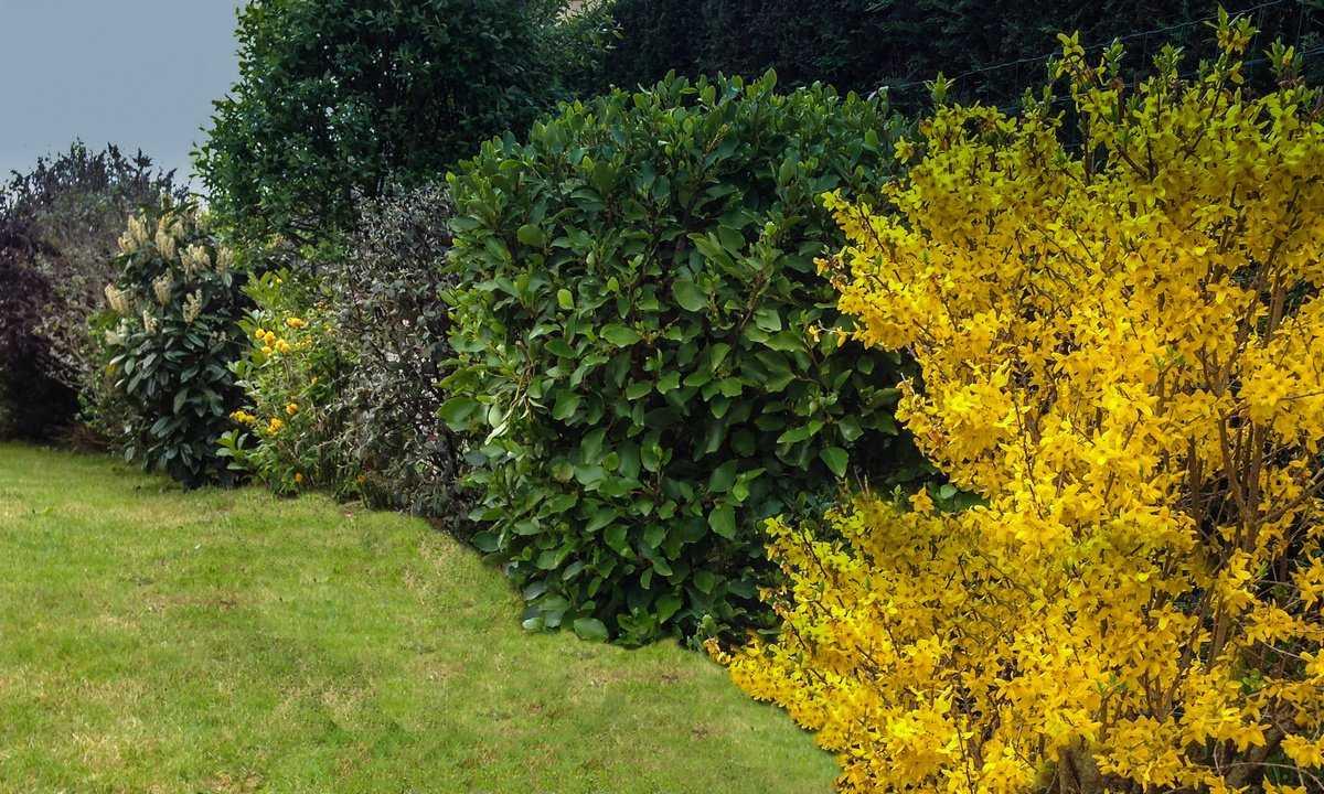 Посадки в тенистых местах. тенелюбивые плодовые кустарники для сада