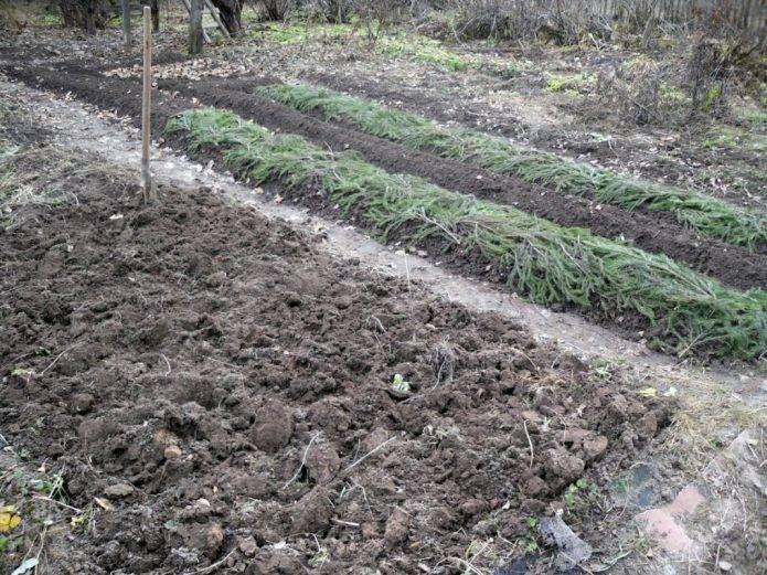 Повышаем урожай овощных культур при помощи теплых грядок