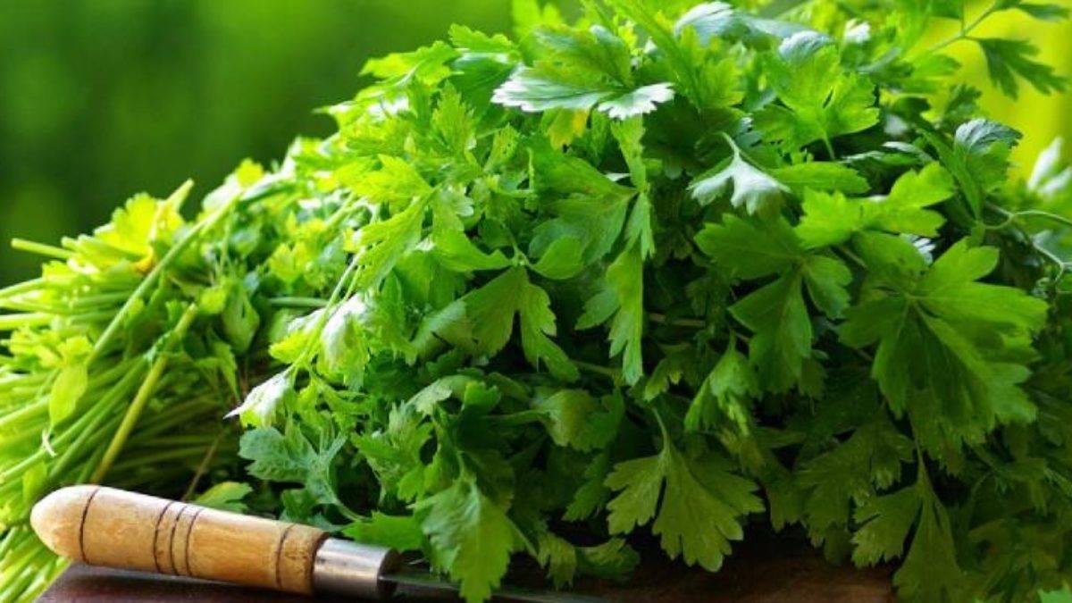 Сбор собственных семян с зелени