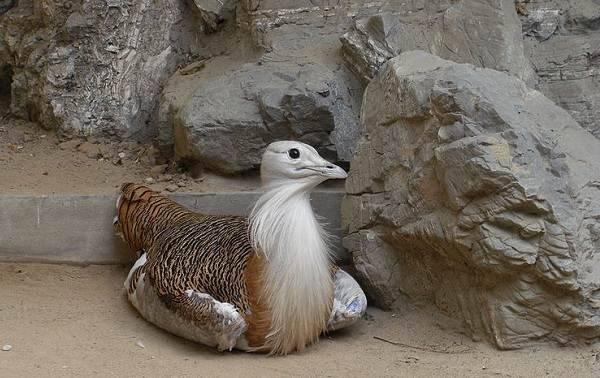 Почему утка плавает по воде. лечение и профилактика намокающего оперения уток. утка, чистящая перья