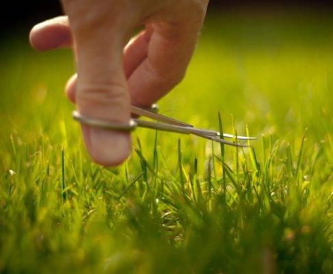 Как бороться с сорняками на огороде – лучшие методы и средства