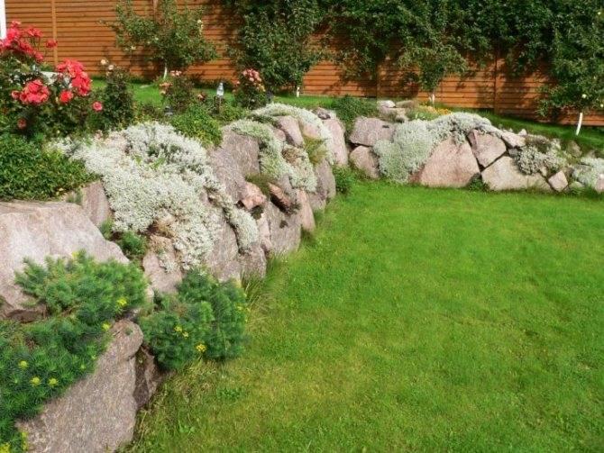 Камелия — обзор видов и сортов для сада и комнаты, видео