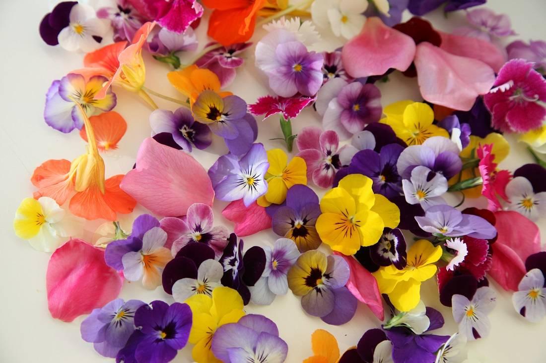 Съедобные цветы против хронических заболеваний. 55 видов вкусных цветов