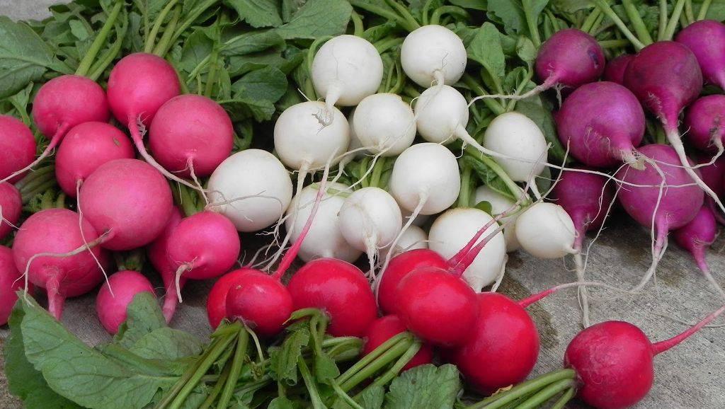 Выращивание хорошего урожая редиса в яичных ячейках