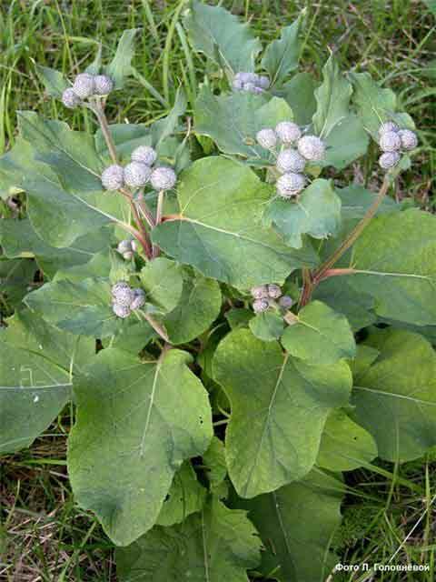 Полезные травы на огороде – ароматно, вкусно и лечебно