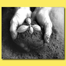 Почему погибает рассада? 3 опасных периода при выращивании рассады
