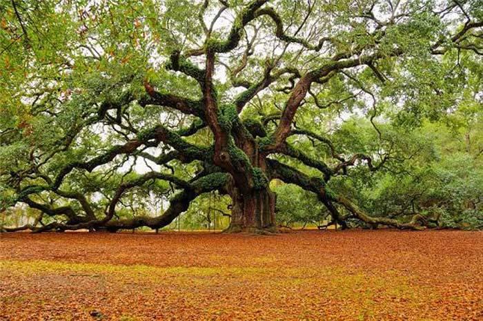 Основные сведения о древесине