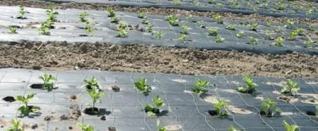 Как избавиться от сорняков и травы навсегда без химии