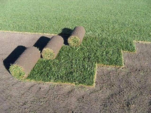 Рулонный газон: достоинства, укладка, уход