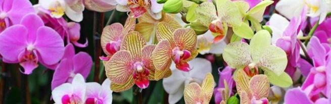 Рассказываем, как подкармливать орхидею в домашних условиях