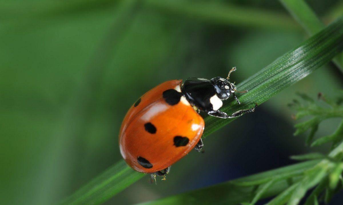 Загадочное насекомое всех времен жужелица