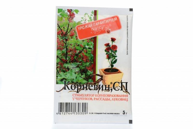 Применение корневина для приживаемости и укоренения растений