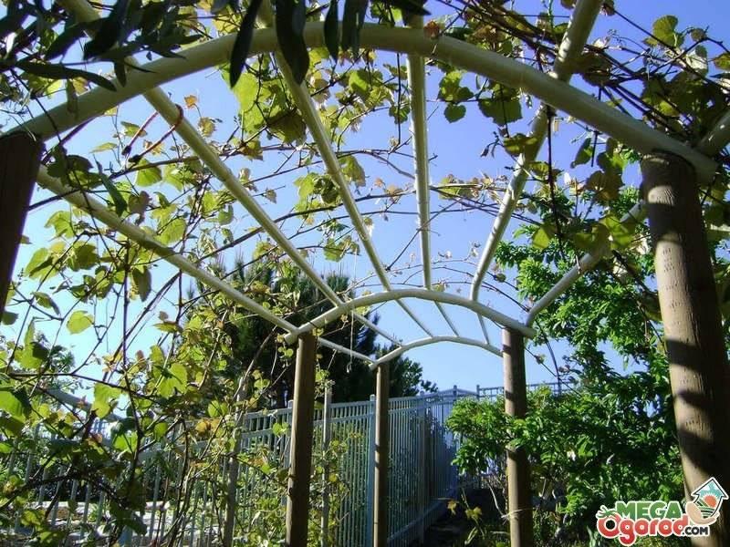 Шпалеры для винограда своими руками: 3 варианта