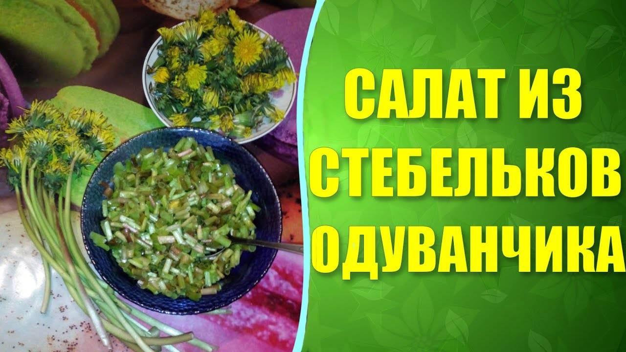 Одуванчик: польза и вред, оригинальные рецепты из листьев, цветов и корней