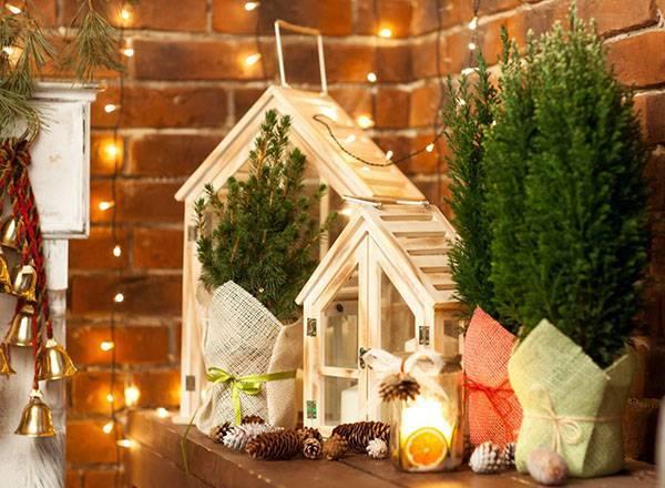 Кипарисовик — лучшее хвойное растение для очищения воздуха в комнатах