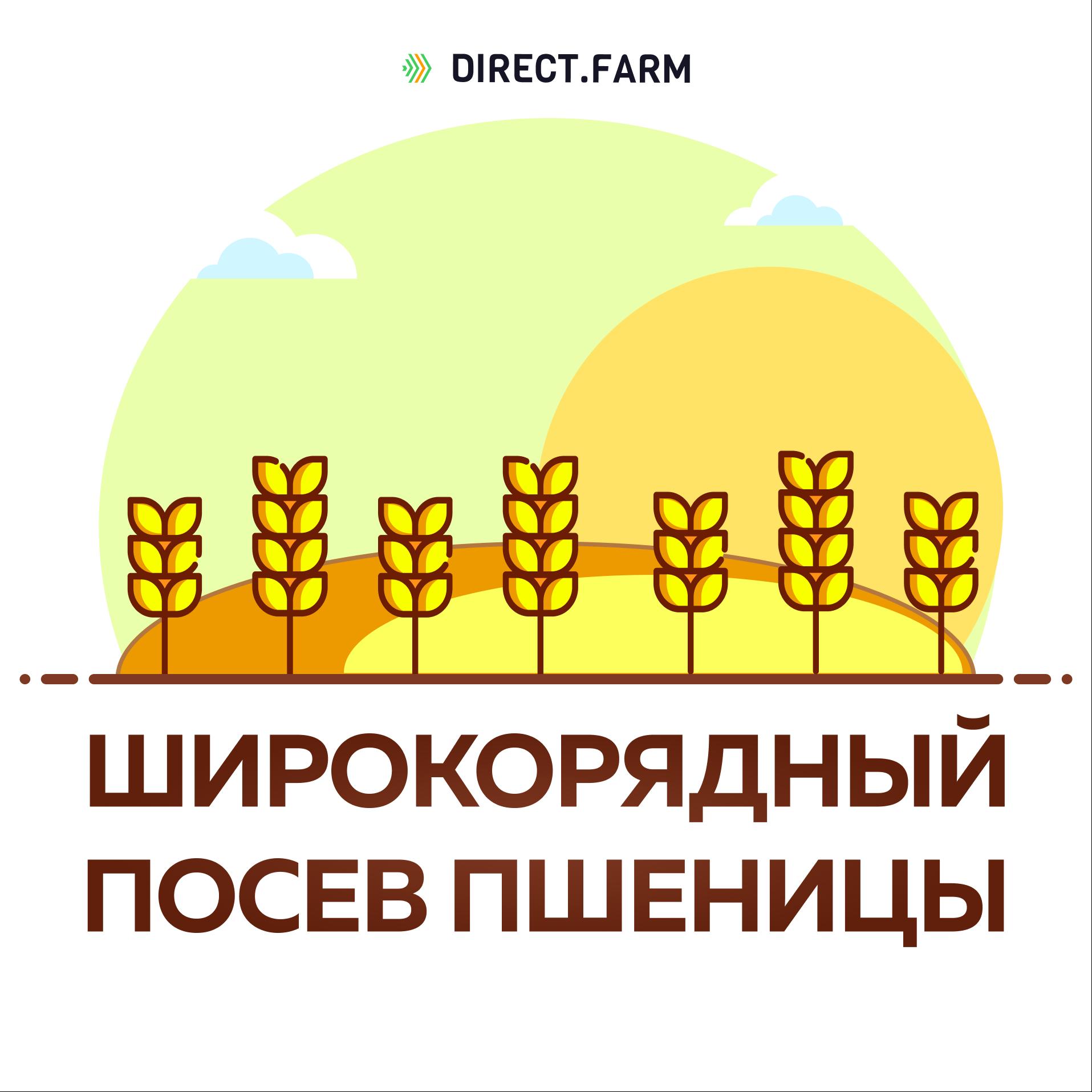 Какие вносить удобрения при посеве подсолнечника, нормы