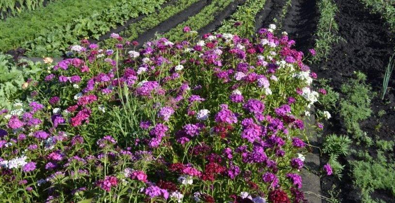 Средства, стимулирующие рост растений