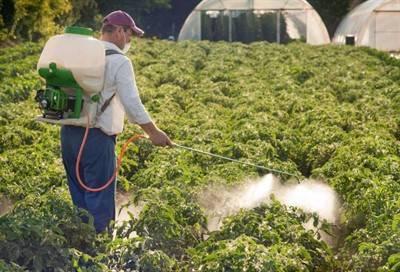 Борная кислота для растений применение в огороде.
