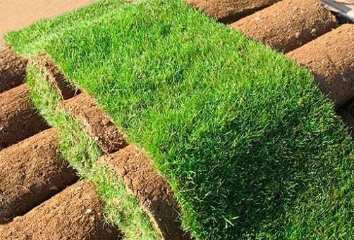 Как самостоятельно уложить рулонный газон?
