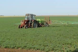 Правила посадки бобов в открытый грунт и ухода за ними