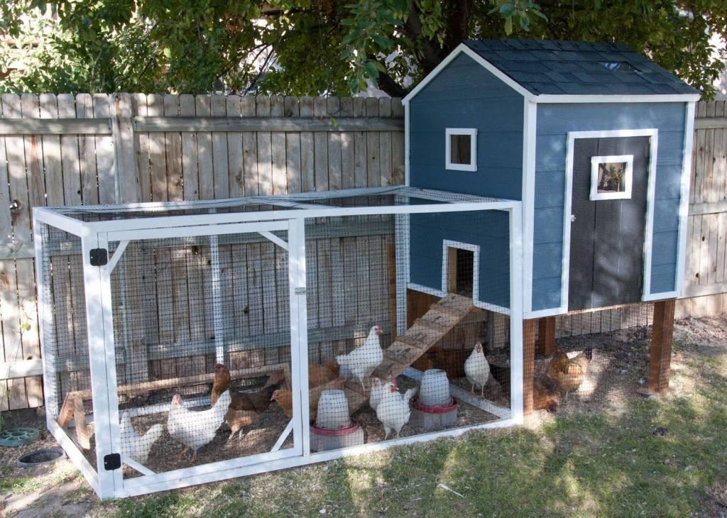 Как построить зимний курятник на 20 кур?