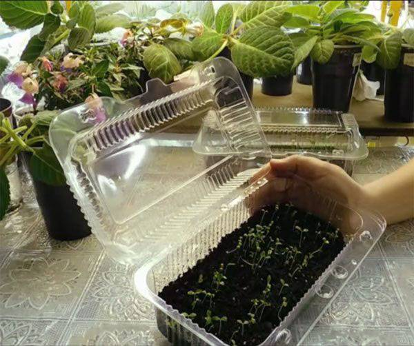 Яркое украшение участка — гвоздика китайская махровая микс: выращивание из семян, когда сажать и как ухаживать за эффектным цветком