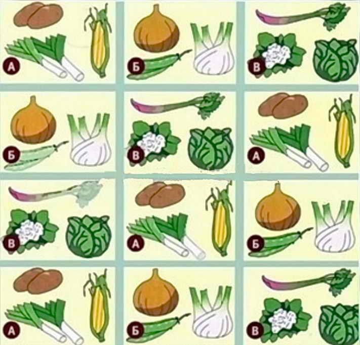 Правила севооборота на грядках, таблица чередования овощных культур