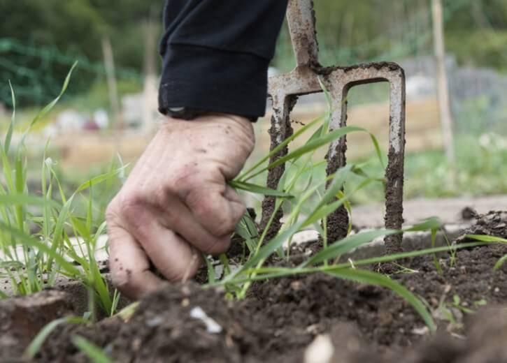Прекрасная альтернатива покупным органическим и минеральным удобрениям — зеленое удобрение из травы, как приготовить, отзывы