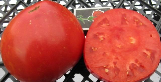 Выращивание томата сахарный бизон
