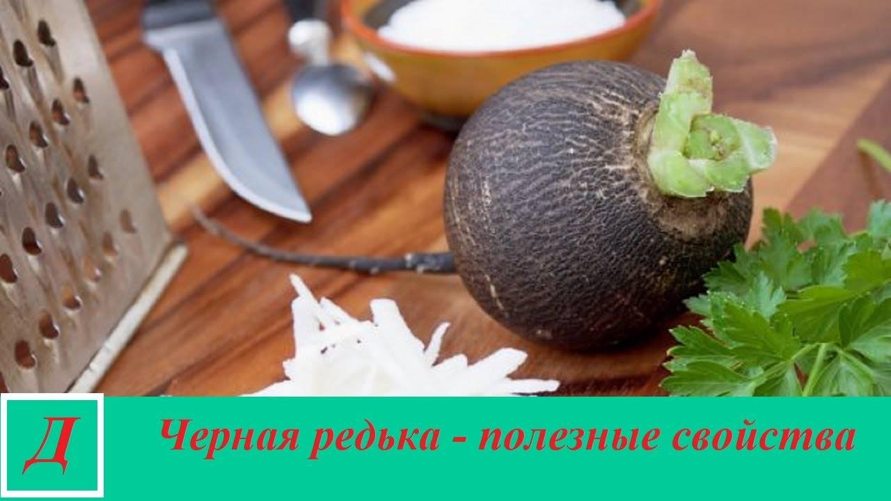 Польза редьки черной для организма и возможный вред. рецепты приготовления целительных средств