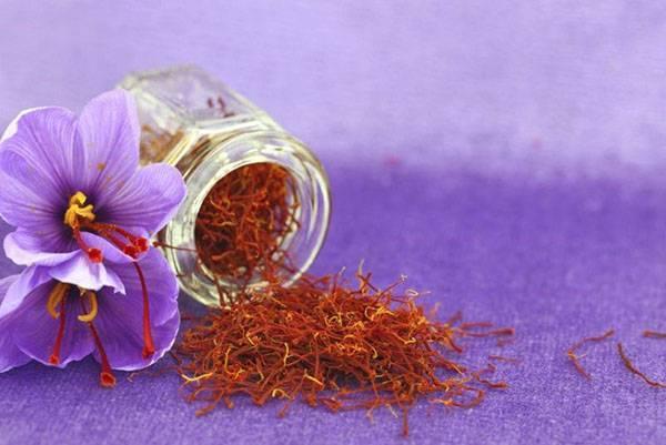 Полезные свойства шафрана - применение в медицине, видео