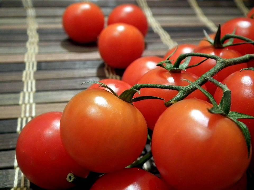 Самые урожайные томаты для ленинградской области