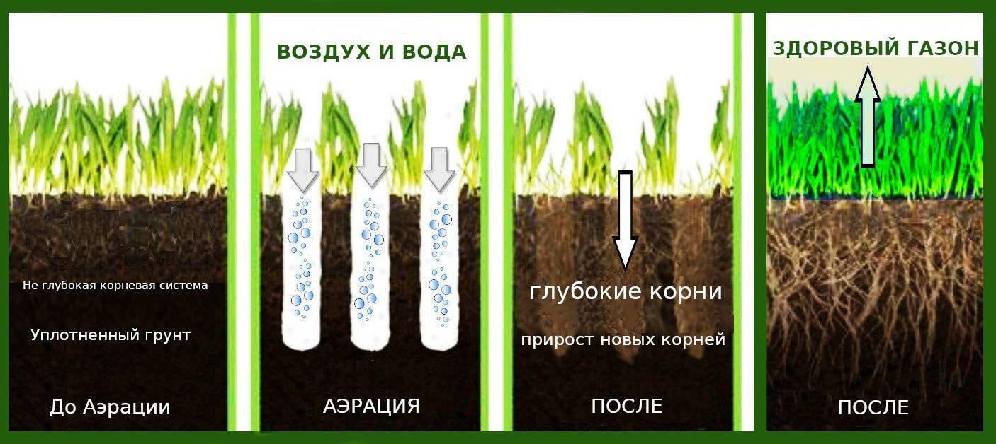 Грунт для газона: описание, составы почвы, торф