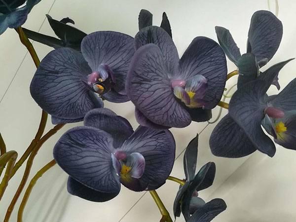 Описание с фото болезней орхидей фаленопсис и других (листьев, корней, бутонов цветов, цветоносов) и их лечения