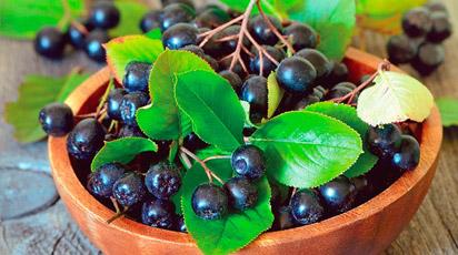 8 лучших плодово-ягодные кустарника для сада на даче