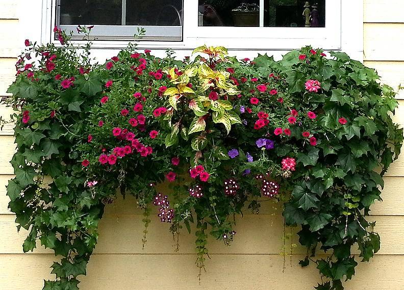 Ампельные цветы для сада в кашпо и их названия: выбор растений и цветы для балкона, их расположение