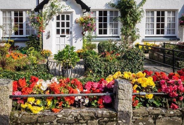 Обзор самых неприхотливых долгоцветущих многолетников для дачи и сада с фото