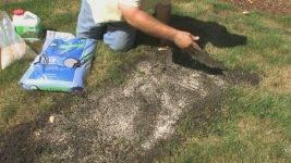 Посадка газона: когда лучше сеять и как правильно это сделать