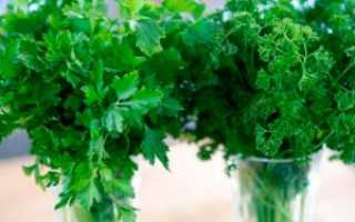 Петрушка – двулетнее растение