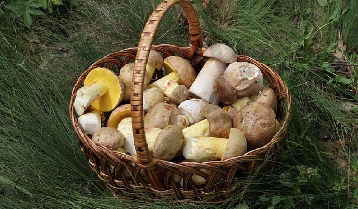 Как искать грибы в лесу. знакомый лесник поделился несколькими лайфхаками
