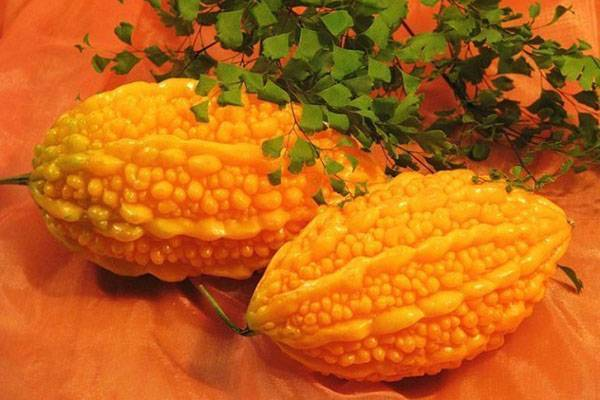 Выращивание момордики из семян доступно каждому