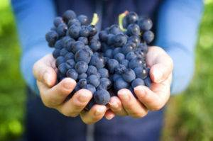 Как приготовить компот из винограда