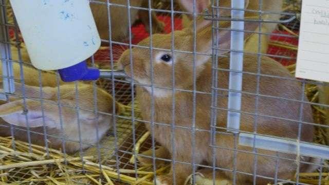 Поилки для кроликов из разных материалов делаем своими руками