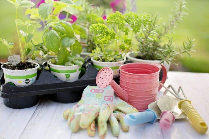 Важность своевременной посадки топинамбура – когда сажают земляную грушу для получения богатого урожая?
