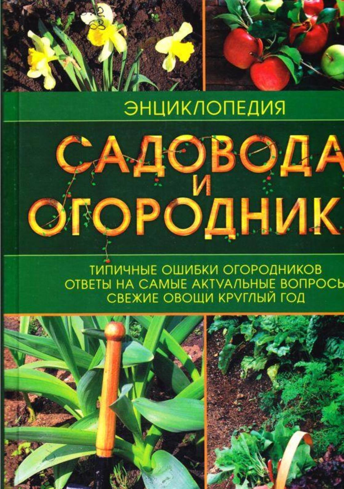 Сорта китайской сливы для садов россии