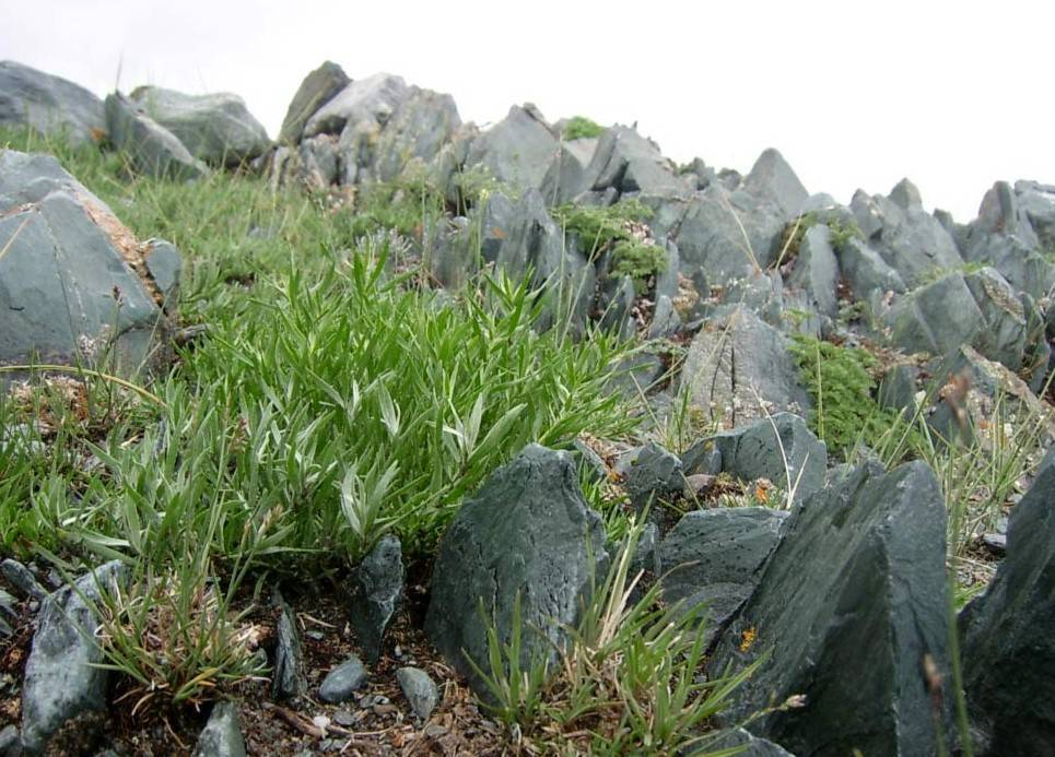 Выращивание эстрагона — это интересно