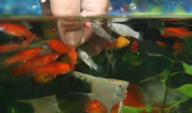 Секреты кормления аквариумных рыб