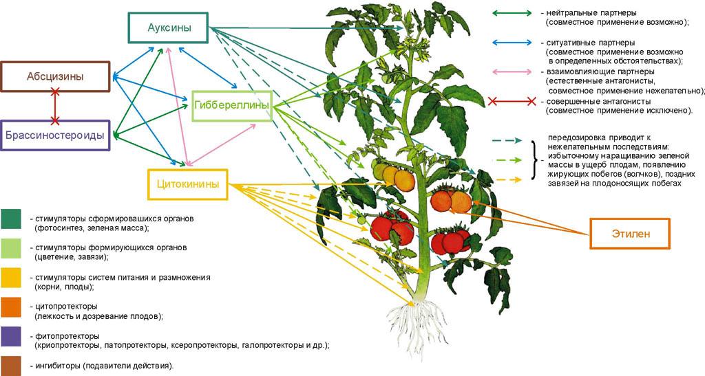 Регуляторы роста растений: виды и применение