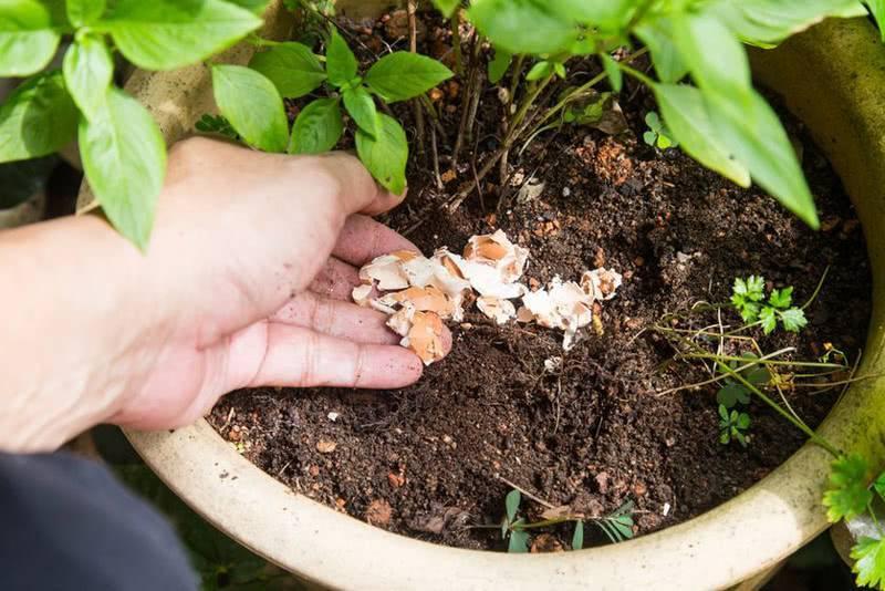 Удобрение для комнатных растений из скорлупы яиц