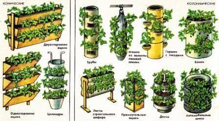 Как садить клубнику семенами в доме